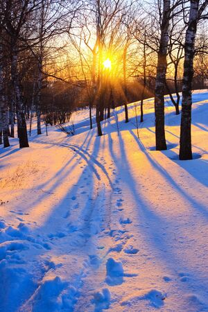 Beautiful sunset in a winter park, Russia Stock Photo - 6082908