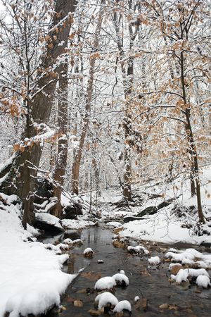Winter in Washington DC, Rock Creek park Stock Photo - 6082949
