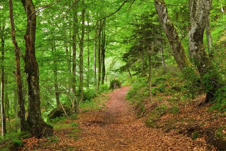 park path: Green mountain forest in Pyrenees Stock Photo