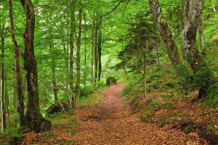 Groene bergbos in Pyreneeën