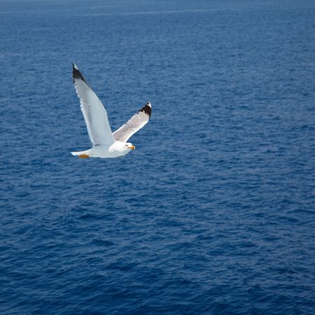 Flying seagull Stock Photo - 6370827