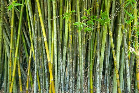 Bamboo background Stock Photo - 6410956