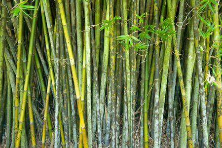 Bamboo background Stock Photo - 6410956