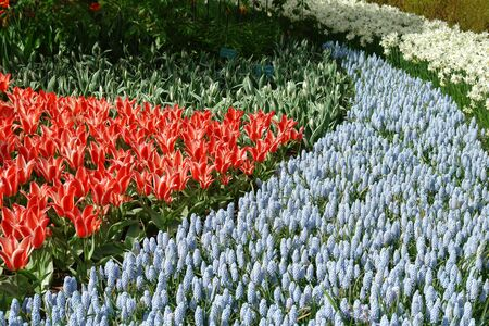 Spring flower bed Stock Photo - 6410931