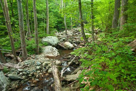 Wooden river in Shenandoah national park, VA, USA photo
