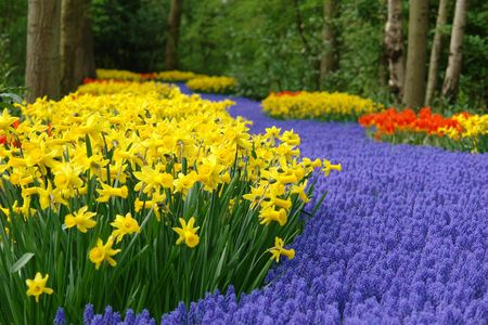 bluebells: Spring flower bed Stock Photo
