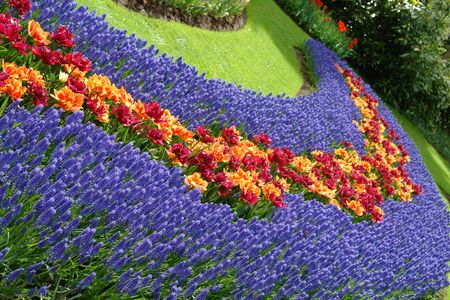 hyacinths: Spring flower bed Stock Photo
