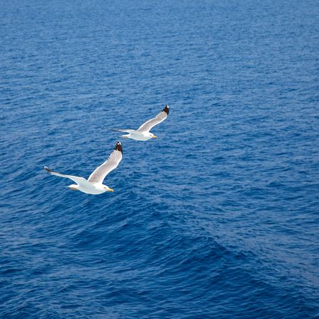 Flying seagulls over blue water background Stock Photo - 6678950