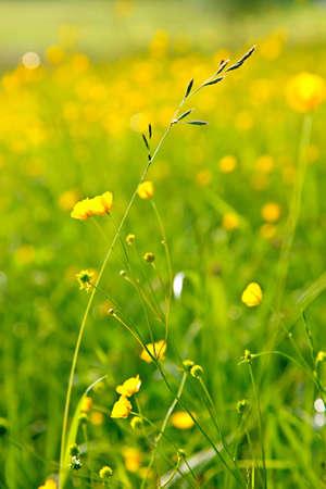 Sunny meadow Stock Photo - 6918482