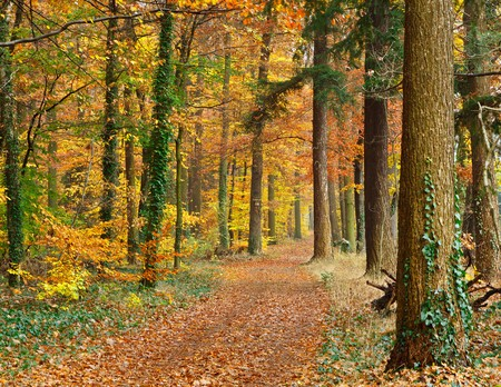 Pathway in the autumn forest Stock Photo - 7260126