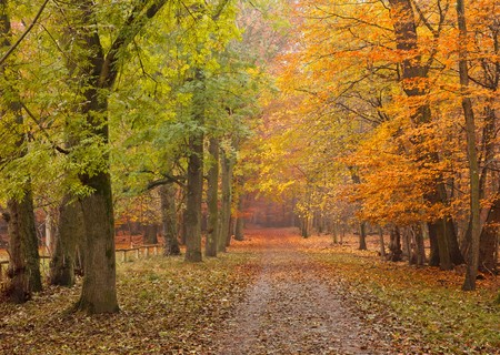 Pathway in the autumn forest Stock Photo - 7315278