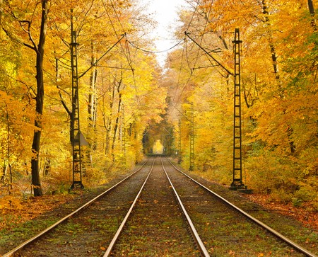 Railway in autumn forest Stock Photo - 7417186