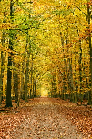 Pathway in autumn forest photo