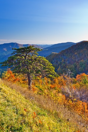 Autumn in Shenandoah National park photo