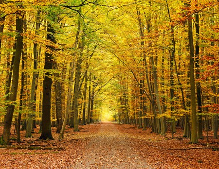 autumnal: Pathway in the autumn forest
