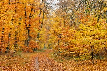 Autumn forest Stock Photo - 7459397