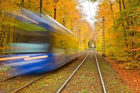 Railway in autumn forest photo