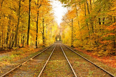 railway transportation: Railway in autumn forest