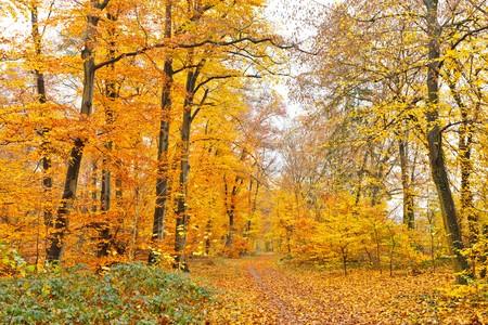 Autumn forest Stock Photo - 7554085