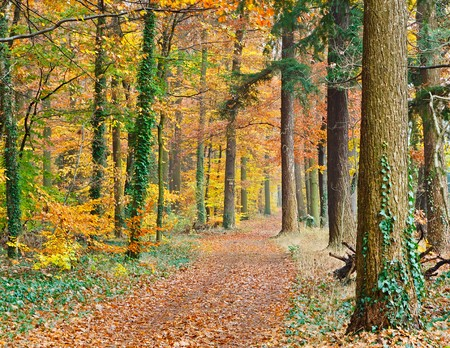 Pathway in the autumn forest photo