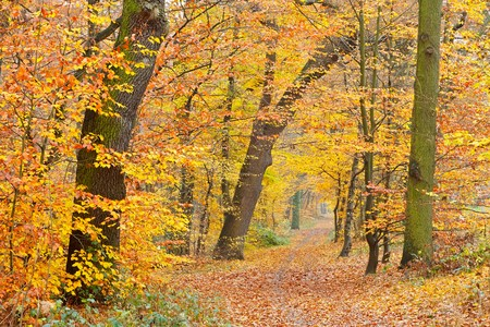 Pathway in the autumn forest Stock Photo - 7606124