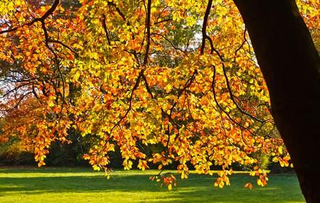Autumn foliage at sunny day Stock Photo - 7671621