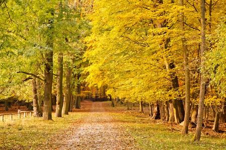 Colorful autumn park Stock Photo - 7908668