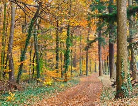 Autumn forest Stock Photo - 7908662