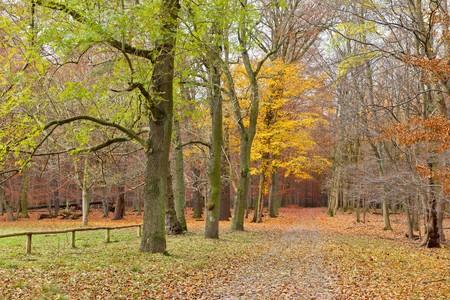 Autumn park Stock Photo - 7908667