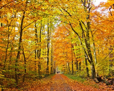 Colorful autumn park Stock Photo - 7902050