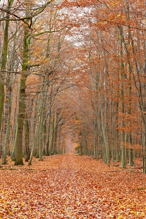 Pathway in the autumn forest Stock Photo - 7908710