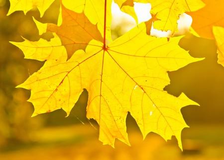 Yellow autumn leaves Stock Photo - 7902048