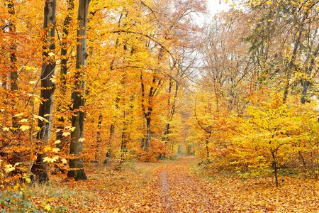 Colorful autumn forest Stock Photo - 7902044
