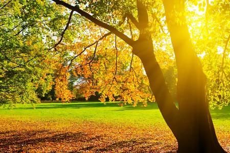 공원에서 햇빛이 들어간 노란 가을 나무