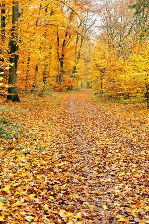 Autumn park Stock Photo - 8239838