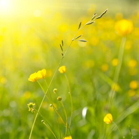 Sunny meadow photo