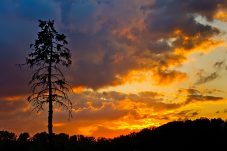 evening glow: Pine tree and colorful sky