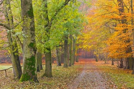 In autumn park Stock Photo - 9950230