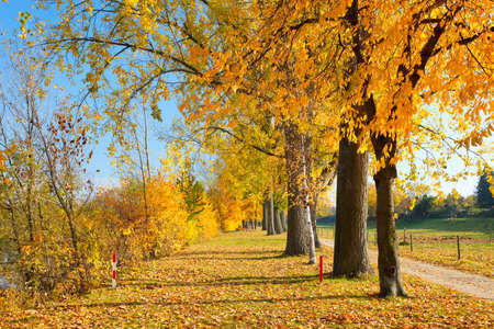 Colorful autumn Stock Photo - 9950248