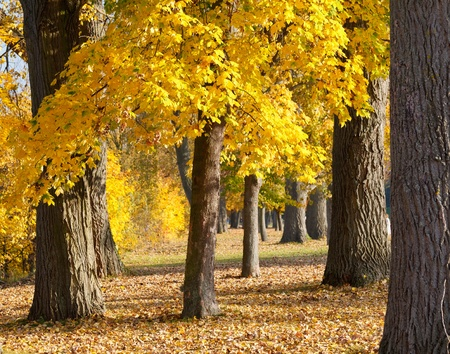 Colorful autumn Stock Photo - 9950244