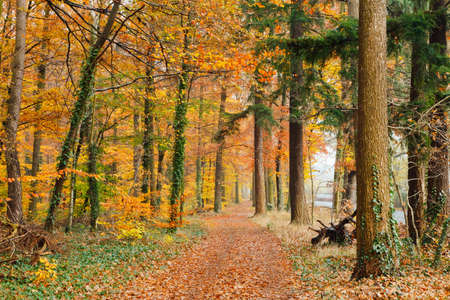 Pathway in the autumn forest Stock Photo - 9950273