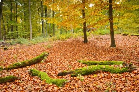 Colorful autumn Stock Photo - 9950270