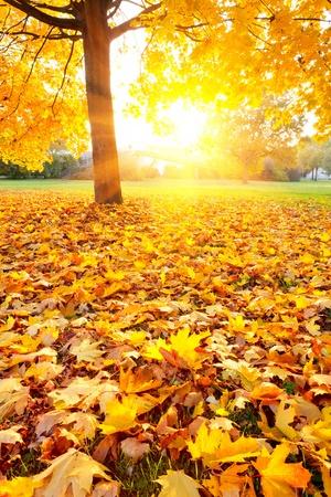Colorful autumn Stock Photo - 9950262