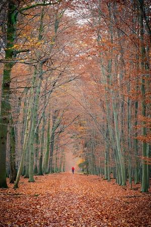 Camino en el bosque de oto�o Foto de archivo