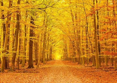 Pathway in the autumn park Stock Photo - 9950271