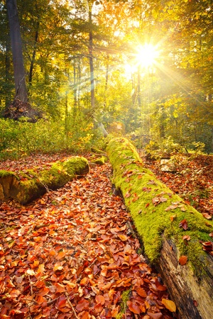 Colorful autumn in the forest Stock Photo - 10059291