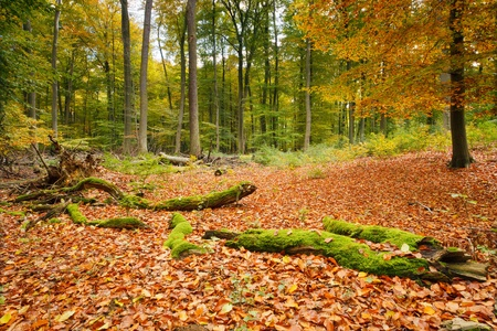 Colorful autumn Stock Photo - 10059292
