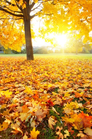Colorful autumn Stock Photo - 10059289
