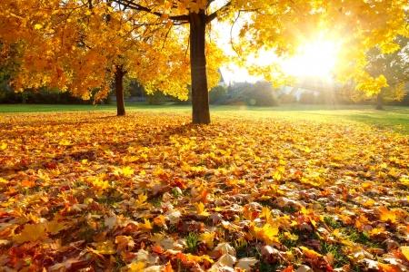 カラフルな秋 写真素材