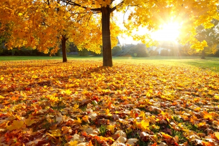 autumn in the park: Colorful autumn